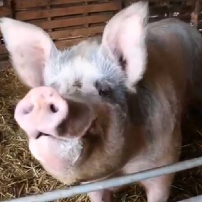 George the Pig at FARS