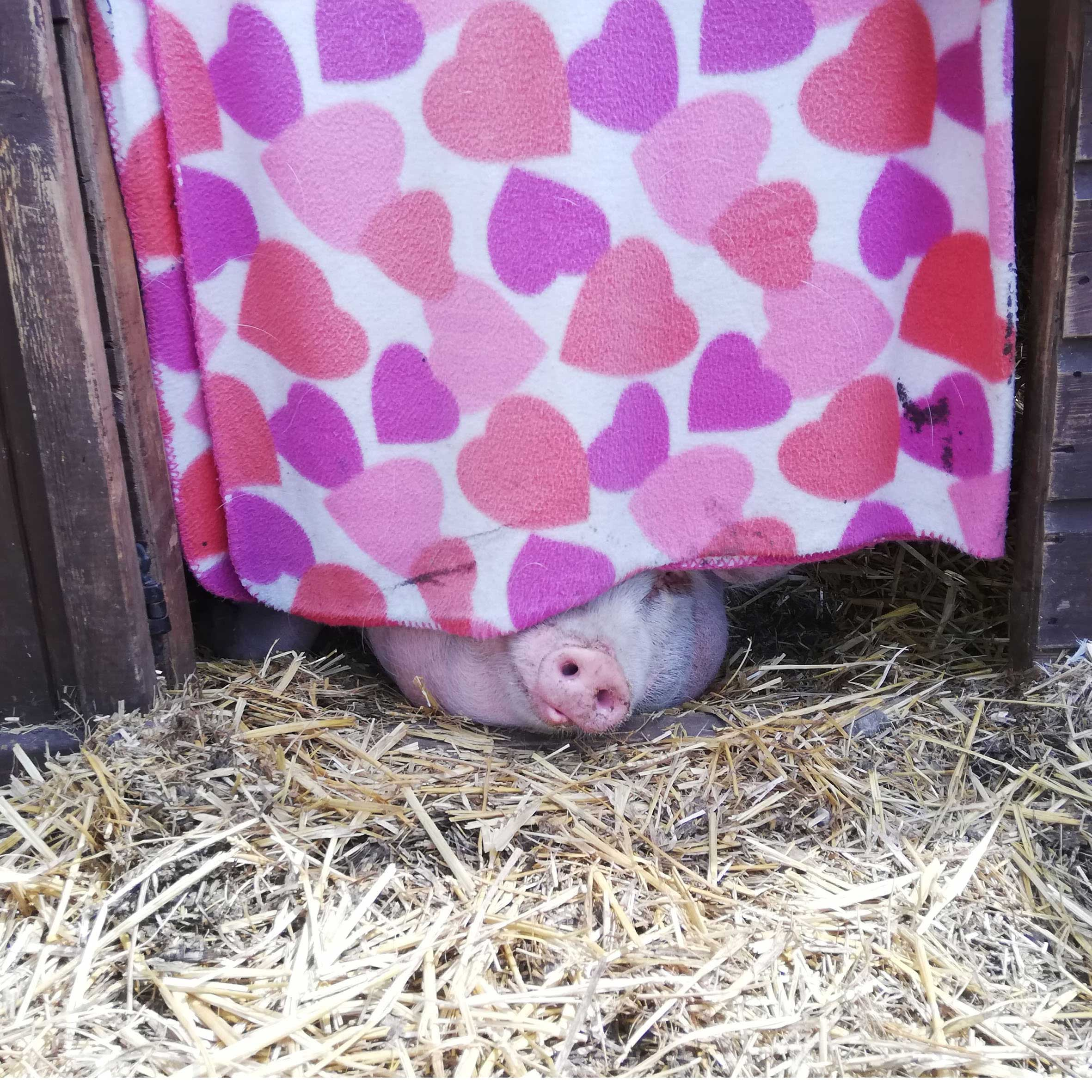 Dolly peeping under her curtain at FARS