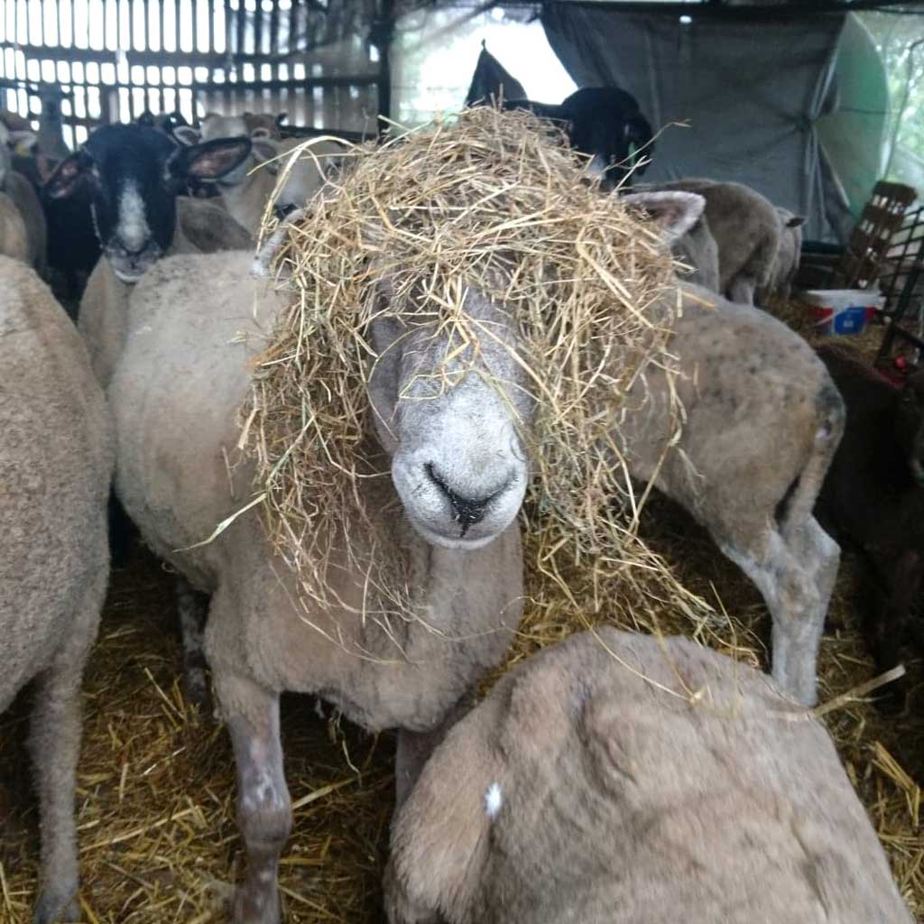Who's that behind the hay?
